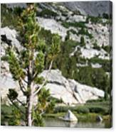 Treasure Lake Pine Canvas Print