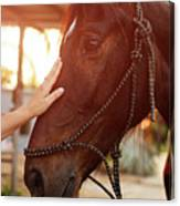 Treating From Depression With The Help Of A Horse Canvas Print
