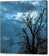 Tree # 23 Canvas Print