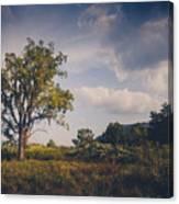 Tree 23 Canvas Print