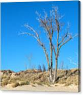 Tree And A Dune Canvas Print