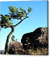 Tree And Rock Canvas Print