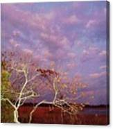 Tree And Sky At Cape May Point State Park  Nj Canvas Print
