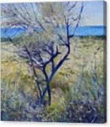 Tree At Aseeb Oman 2002 Canvas Print