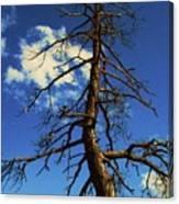 Tree At Bryce Canyon Utah. Canvas Print