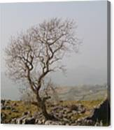 Tree At Cowside Canvas Print