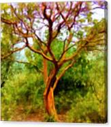 Tree At Kew Gardens Canvas Print