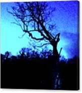 Tree At Night Canvas Print