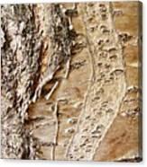 Tree Bark 9 Canvas Print