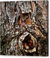 Tree Bark With Knothole Canvas Print