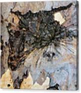 Tree Barks Pattern #13 Canvas Print