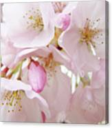 Tree Blossoms Art Prints Canvas Pink Spring Blossoms Baslee Troutman Canvas Print