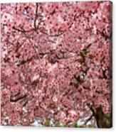Tree Blossoms Pink Blossoms Art Prints Giclee Flower Landscape Artwork Canvas Print