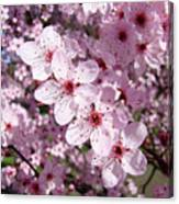 Tree Blossoms Pink Spring Flowering Trees Baslee Troutman Canvas Print