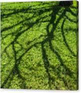 Tree Branch Shadow Canvas Print