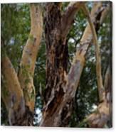 Tree Branch Texture 1 Canvas Print