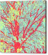 Tree Branches 8 Canvas Print