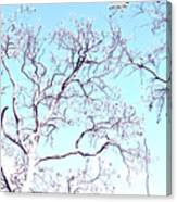 Tree Branches Reaching For Heaven 2 Canvas Print