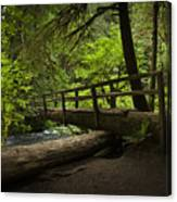 Tree Bridge Canvas Print