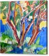 Tree Burst Canvas Print