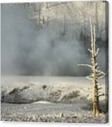 Tree By The Thermal - Yellowstone Canvas Print