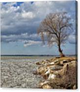 Tree By Water Canvas Print