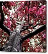 Tree Canopy Red Canvas Print