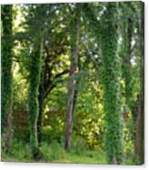 Tree Cathedral 2 Canvas Print