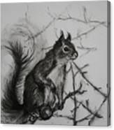 Tree Climbing Pro. Canvas Print