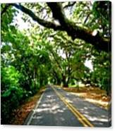 Tree Covered Road Canvas Print