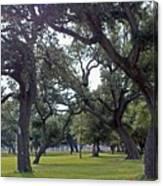 Tree Dance Canvas Print