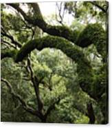 Tree Drama Canvas Print