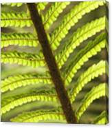 Tree Fern Frond Canvas Print