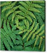 Tree Fern Fronds Canvas Print