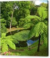 Tree Ferns Canvas Print