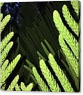 Tree Fingers Canvas Print
