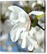 Tree Floral Garden White Magnolia Canvas Print