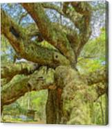 Tree For The Ages Canvas Print