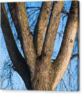 Tree Fork Canvas Print