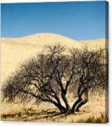 Tree Formation 3 Canvas Print