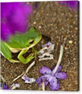Tree Frog Under Flower Canvas Print