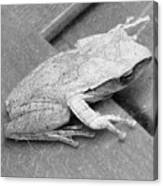 Tree Frog Up Late Canvas Print