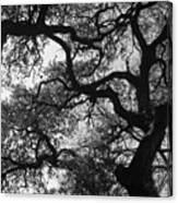 Tree Gazing Canvas Print