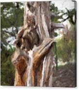 Tree Gnarl Canvas Print