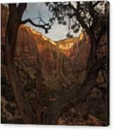 Tree Heart Canvas Print