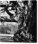 Tree I Canvas Print