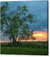 Tree Impression Canvas Print