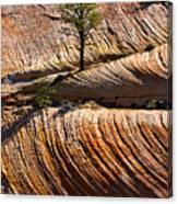 Tree In Flowing Rock Canvas Print