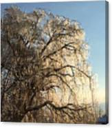 Tree In Ice Canvas Print