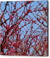 Tree In Pink Canvas Print